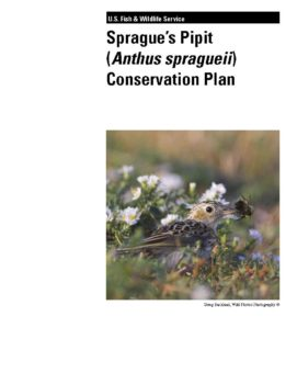 Cover for Spragues Pipit Focal Species Plan (2010)