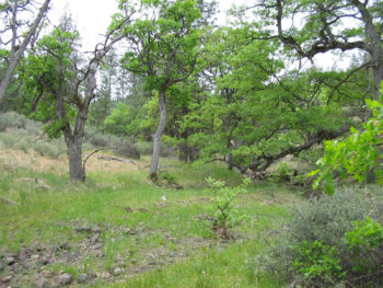 Oak Woodland in the Cascade-Siskiyou National Monument
